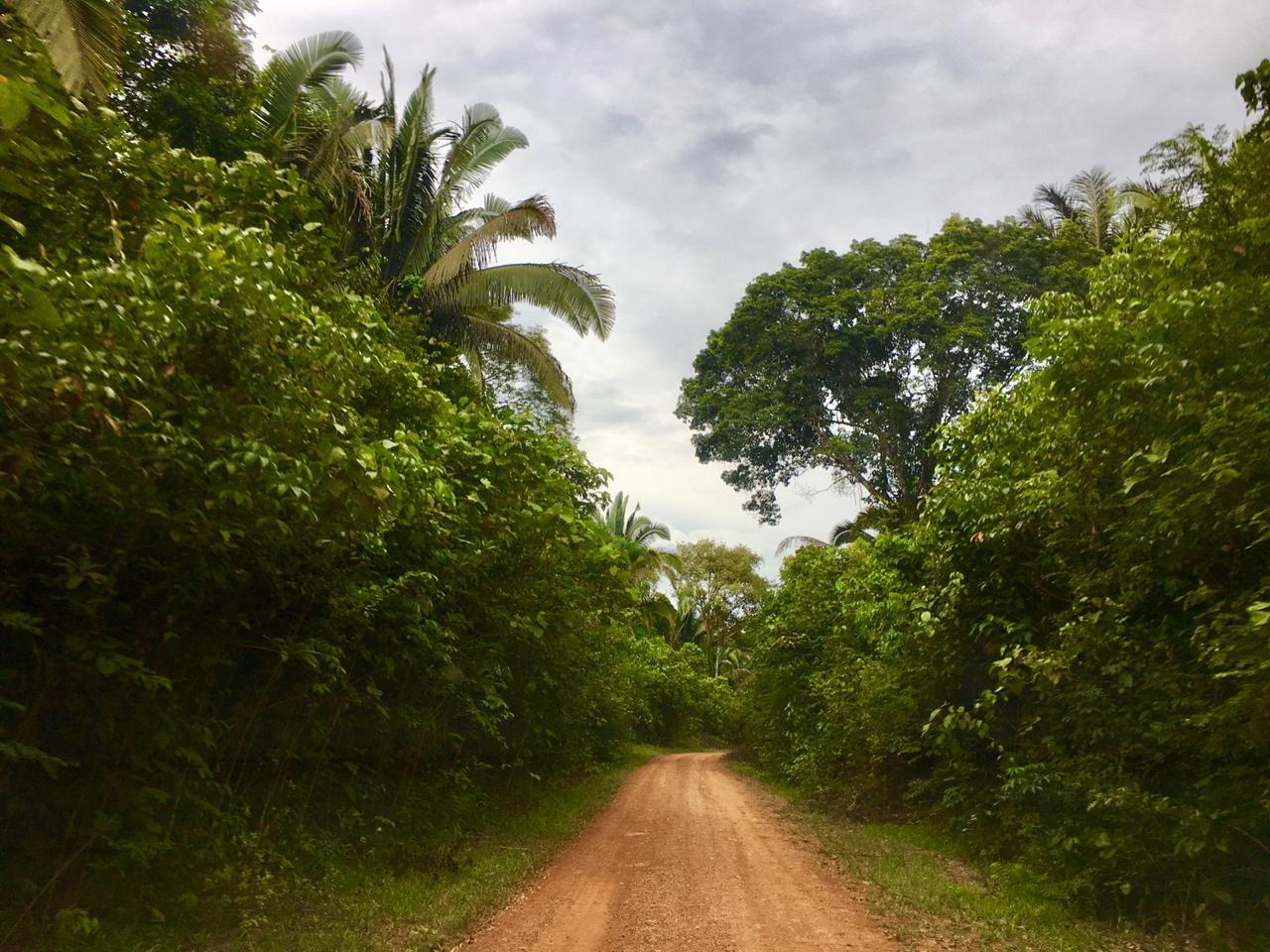 Foto van een verlaten zandweg in de jungle van het Amazonegebied